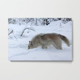 Wolf: Snow Tracker Metal Print