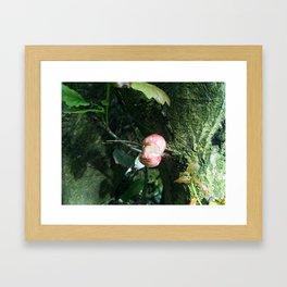 Organ Fungi Framed Art Print