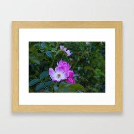 Summer pink wild flowers Framed Art Print
