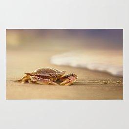 Crab Cribrarius Rug