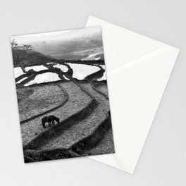 Horses on rice paddies in northern Vietnam Stationery Cards