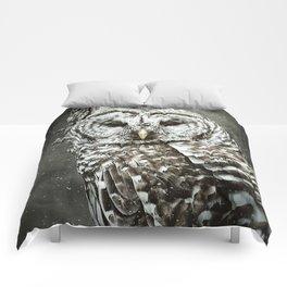 BARRED OWL  Comforters
