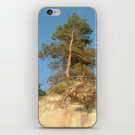 Coastal tree iPhone Skin