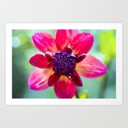 Dahlia / In The Garden / 2 Art Print