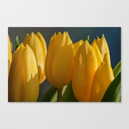 Cut Tulips Canvas Print