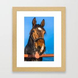 Horse Albert Framed Art Print