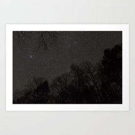 Stars from the Forest Floor Art Print