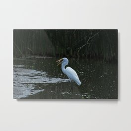 Great Egret Catching a Fish Metal Print