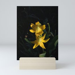 Dew drops on Yellow Glacier Lilies in Glacier National Park Montana Early Morning Mini Art Print