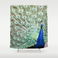 peacock Shower Curtains featuring Peacock by Kakel-photography