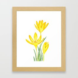 yellow botanical crocus watercolor Framed Art Print