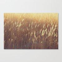 Amber waves No. 1 Canvas Print