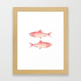 Red Herring Framed Art Print