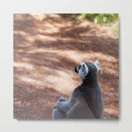 Lemur Catta III Metal Print