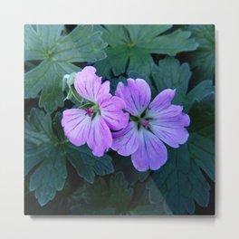 Purple flowers 11 Metal Print