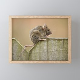 Mouse on the Fence Framed Mini Art Print