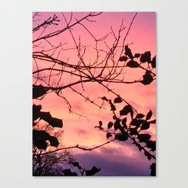Holly tree sunset Canvas Print
