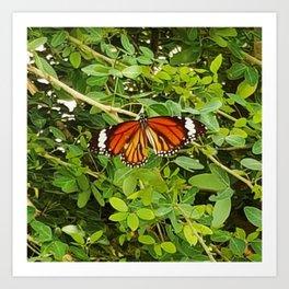 Common Tiger Art Print