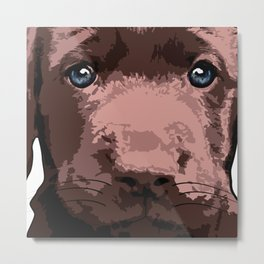 Hot chocolate labrador puppy Metal Print