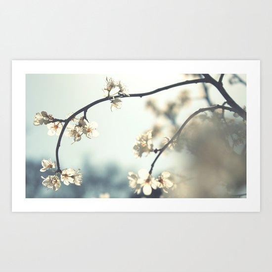 spring break in bloom . . . Art Print