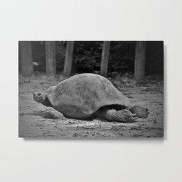 Tortoise Relaxing Metal Print