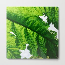 Torn Large Leaf Green Leaf Metal Print