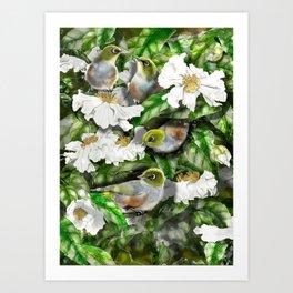 Wax Eyes in a Camellia Bush Art Print