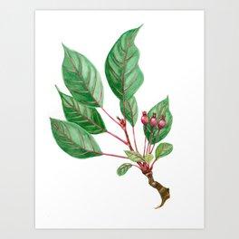 Fresh Twig of a Crabapple Art Print