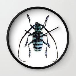 Anoplophora Graafi Beetle Wall Clock