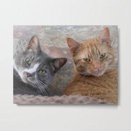 Feline Friends Metal Print