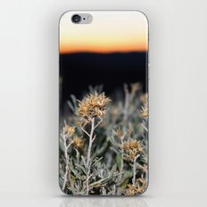 Sagebrush iPhone & iPod Skin