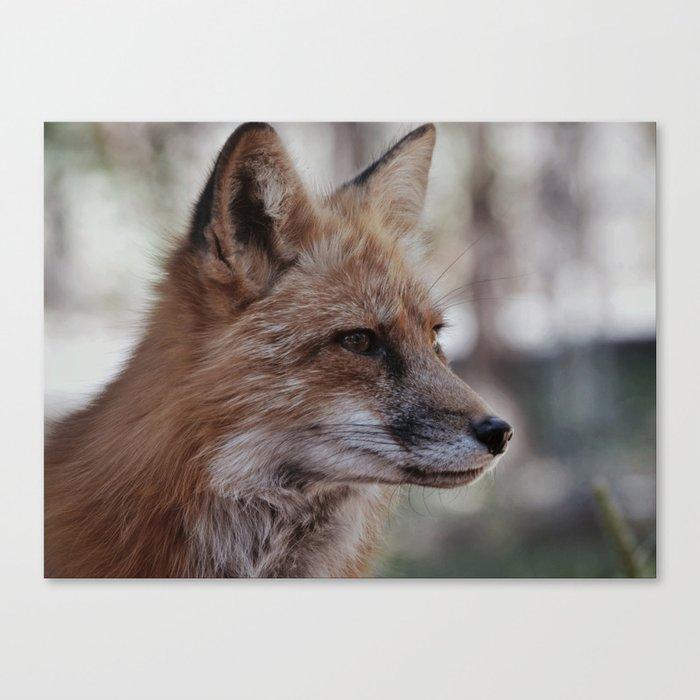 Fox Portrait Canvas Print