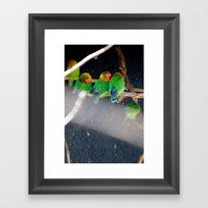 Agapornis Fischeri Framed Art Print