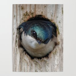Meeting the New Nestbox Homeowner Poster
