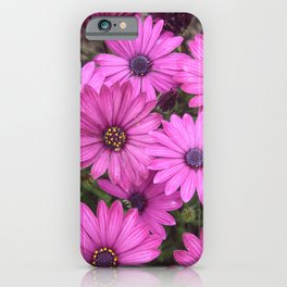 A Crowd Of Pink Purple Daisies iPhone Case