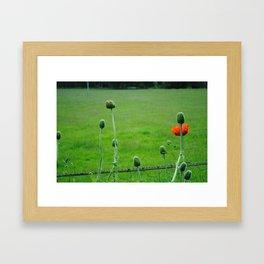 Single Poppy Framed Art Print