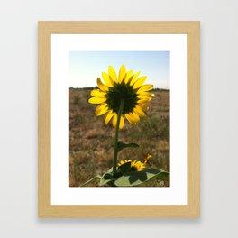 Light through the Sunflower Framed Art Print