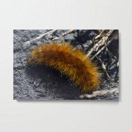 Orange Caterpillar Metal Print