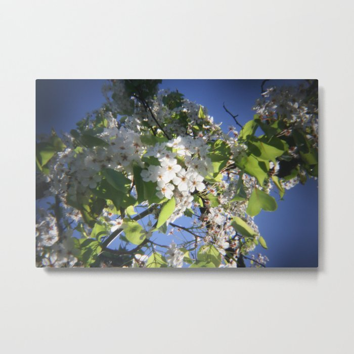 blossoms on vermont Metal Print