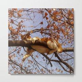 Cat on a tree Metal Print