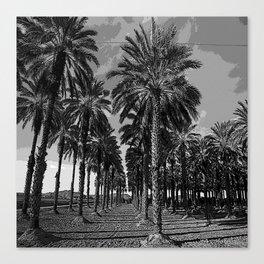 Black & White Date Palms Yuma Pencil Drawing Photo Canvas Print