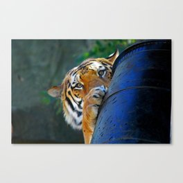 Playful Amur Tiger Canvas Print