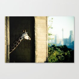 Giraffe (Taronga Zoo Sydney) - The View From My Room Canvas Print
