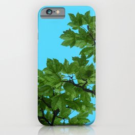 Sycamore Leaves and  a Blue Sky iPhone Case