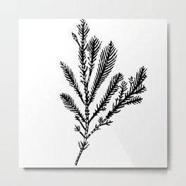 Seaweed 03 Metal Print