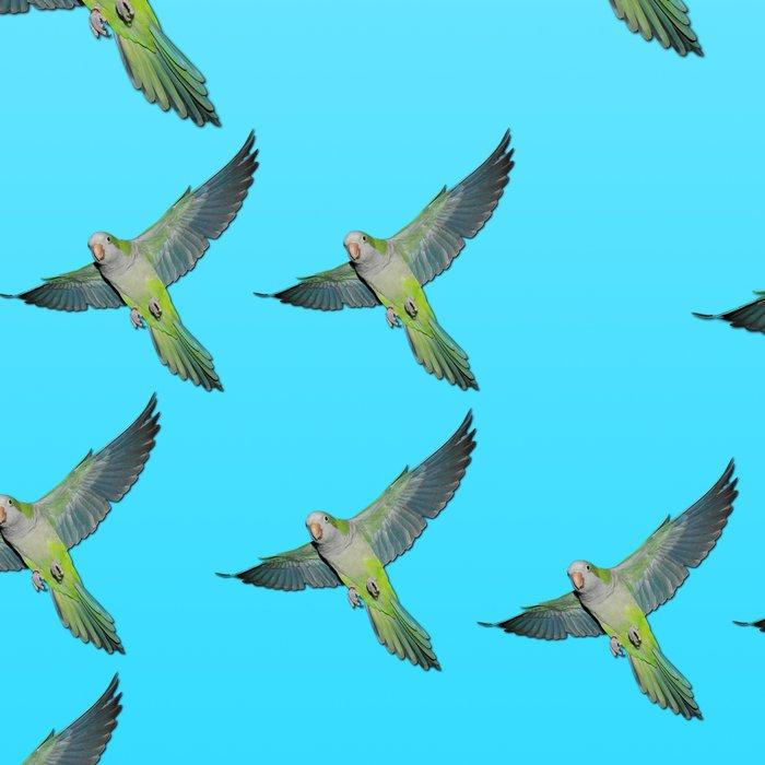 Flying parakeets Leggings