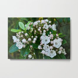 Summer  white mountain laurel Metal Print