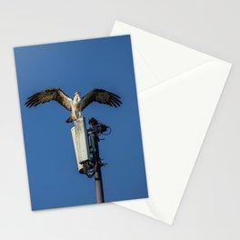 Osprey Wings Stationery Cards