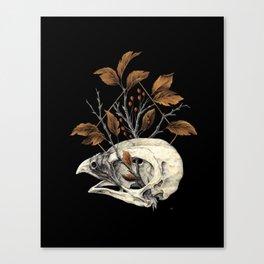 Kite Skull Study Canvas Print
