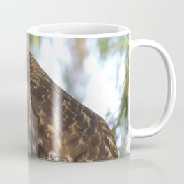 Young Red-Shouldered Hawk in a Desert Willow Coffee Mug